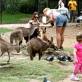 Currumbin Wildlife 03