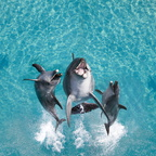 Sea world (4)