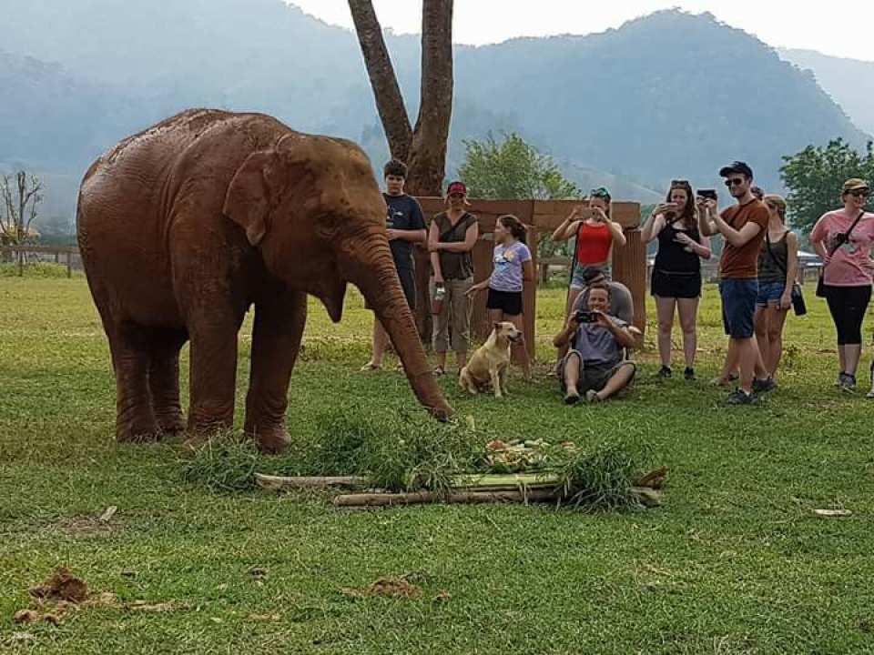 清邁大象自然公園4.jpg