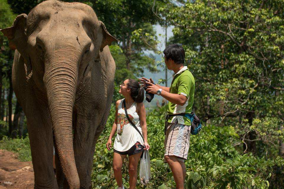清邁大象自然公園2.jpg