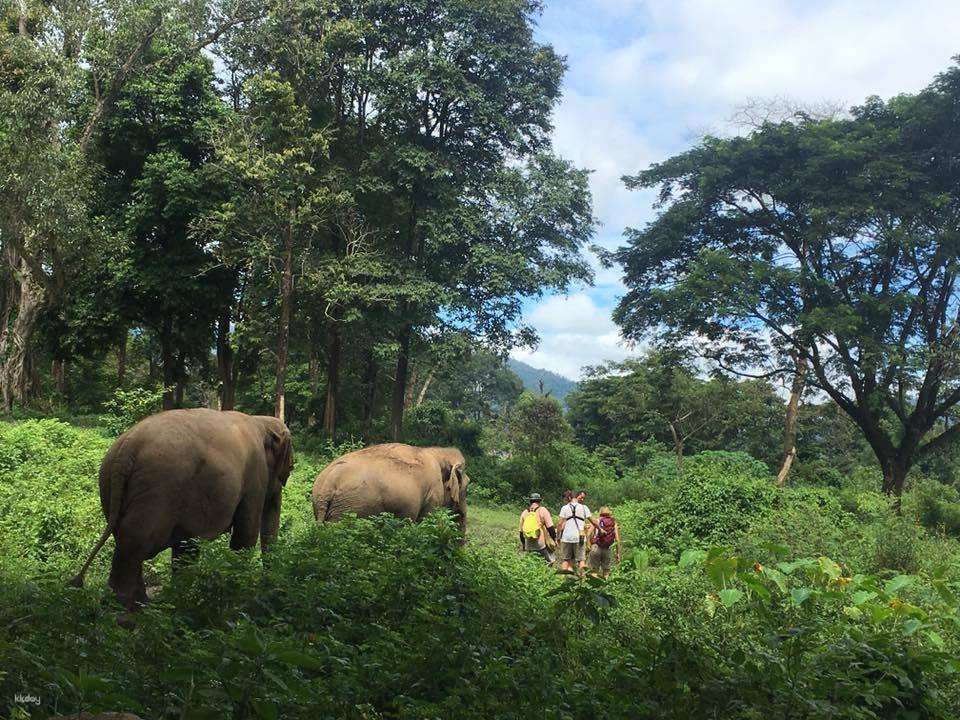 清邁大象自然公園1.jpg