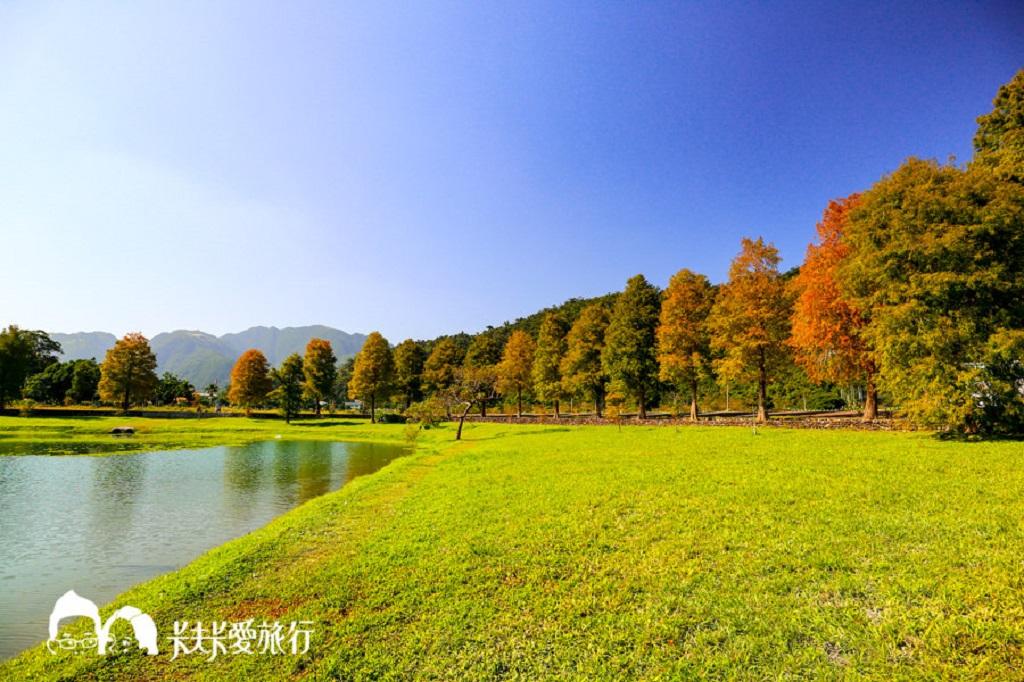 蜊埤湖落羽松